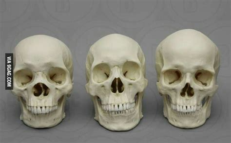 The Difference Between Asian, African And European Skulls