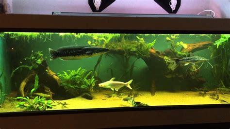 predator monster fish tank youtube