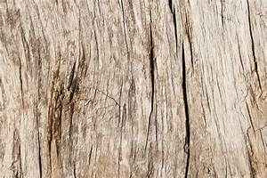 Free, Images, Tree, Branch, Antique, Texture, Floor, Trunk, Old, Formation, Soil, Weathered