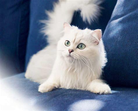 Free Beautiful Cute Cat Amazing & Nice Wallpapers Waytech