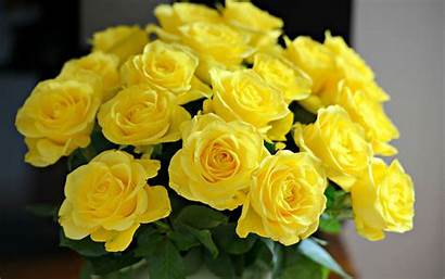 Yellow Rose Roses Collections Vase Wallpapertag