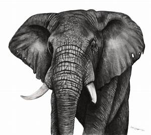 Saatchi Art: Elephant Drawing by Ashleigh Olsen