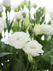 Lang Blühende Pflanzen : die besten 25 wei bl hende str ucher ideen auf pinterest bl hende str ucher bl hende b sche ~ Eleganceandgraceweddings.com Haus und Dekorationen