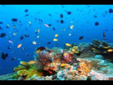schöne bilder sch 246 ne bilder der natur