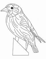 Coloring Goldfinch Eastern State Kansas Flag Pages Iowa Sheets Popular sketch template