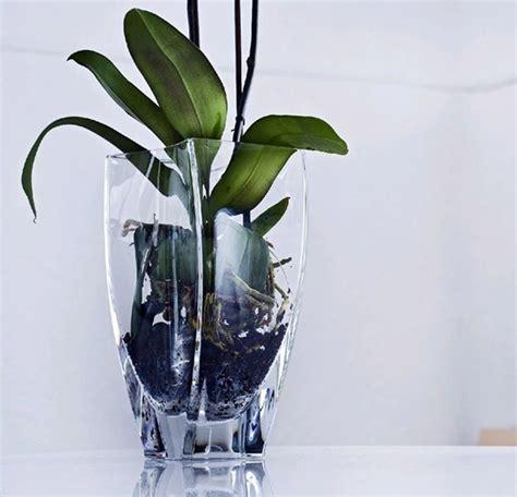coltivare orchidee in vaso perch 232 scegliere i vasi moderni scelta dei vasi perch 232