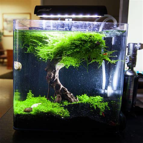 images  nano planted tank  pinterest vase