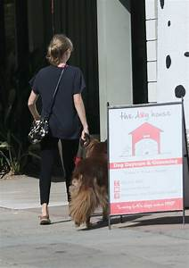 amanda seyfried drops her dog at the dog house for daycare With the dog house daycare
