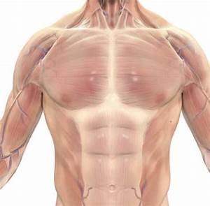 10  Best Chest Exercises To Build Insane Muscles  Complete