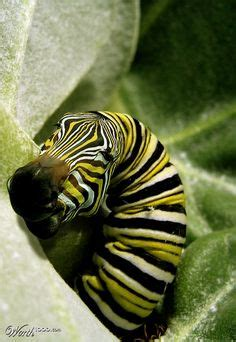 1000+ Images About Worth1000 Galleries On Pinterest  Funny Art, Tigers And Gaudi