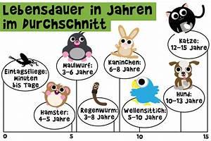Wie Alt Werden Berner Sennenhunde : wie alt werden haustiere ~ Eleganceandgraceweddings.com Haus und Dekorationen