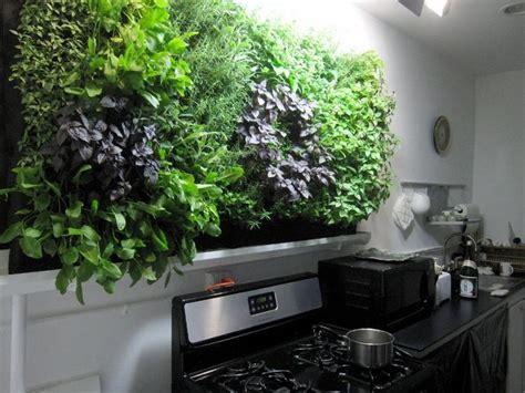 massive kitchen wall herb garden growing herbs