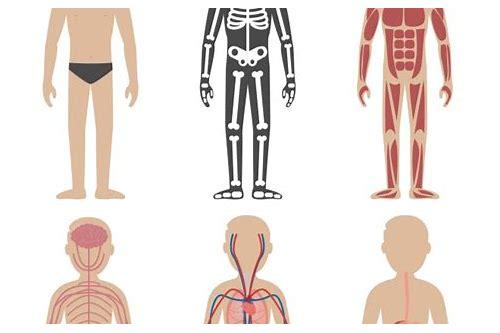 baixar gratis de ebook de anatomia humana