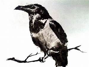 Pied Crow - India Ink Drawing by artmkc on DeviantArt
