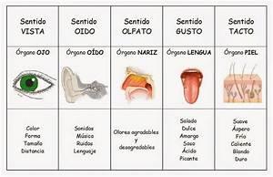 Cuadros comparativos de los órganos de los sentidos para ...