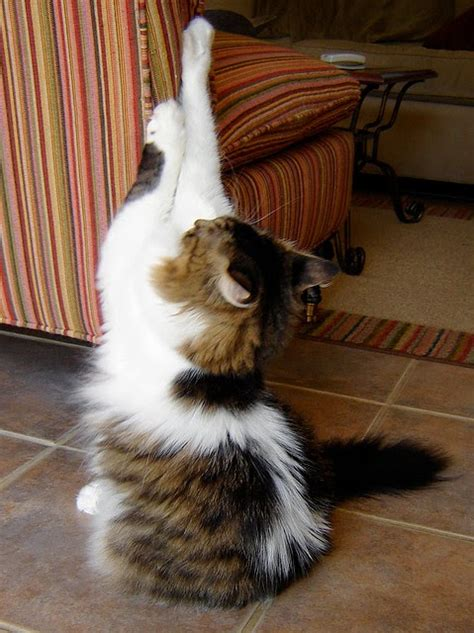 Stop Cat From Scratching Furniture by Kate S Pet Corner Top 10 Tips How To Stop Your Cat