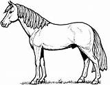 Coloring Pony Pages sketch template