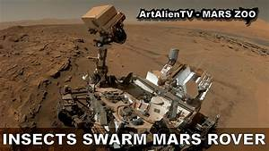 MARS INSECTS SWARM CURIOSITY ROVER SELFIE: UFO's, Birds or ...