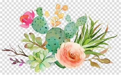 Cactus Watercolor Clipart Floral Succulent Flowers Pink