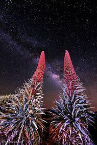 Milky Way Flower