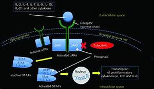 The Jak U2013stat Intracellular Signaling Pathway  Notes  Jak Is Involved In