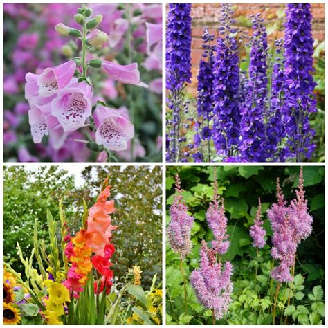 cottage garden plants cottage garden plants perennials annuals bulbs for