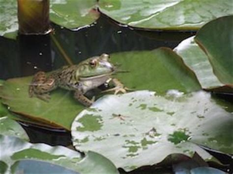 frog fishing  bass fishing lures
