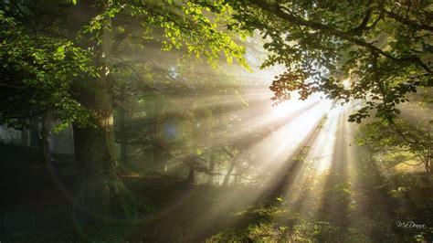 Bright Shiny Morning Woods wallpaper