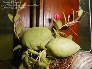 Piante da appartamento resistenti piante appartamento Piante appartamento resistenti