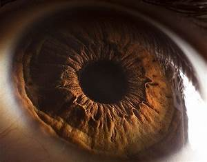 Close up of a brown eye. | Photography Board | Pinterest ...