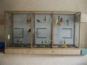 Fabrication D Une Voliere Exterieur : ma voli re d 39 int rieur ~ Premium-room.com Idées de Décoration