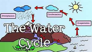 All About The Water Cycle For Kids  Introduction To The