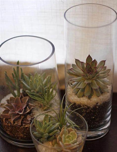indoor succulent planting ideas   beautify  home balcony garden web