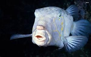 Deep-sea-fish | dive and ocean | Pinterest | Deep sea ...