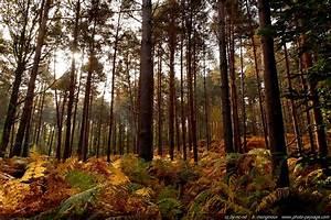 Foret à Bois : cliquez ici pour afficher et t l charger le fond d 39 ecran ~ Nature-et-papiers.com Idées de Décoration