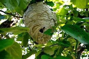 Nid De Guepe Dans Le Toit : essaim d 39 abeilles ferme apicole des neuf bonniers ~ Medecine-chirurgie-esthetiques.com Avis de Voitures