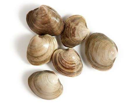 types of clams a guide for buying and cooking clams recipes and cooking food network recipes dinners and
