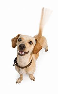 A Wagging Tail – What Does It Really Mean?