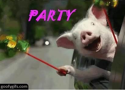 Party Hard Funny Gifs Random Meme Friday