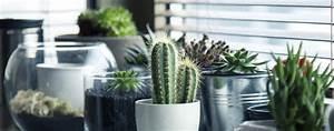 Marc De Café Plantes D Intérieur : l 39 achat des plantes d 39 int rieur botanix ~ Melissatoandfro.com Idées de Décoration
