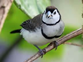 All Finch Birds