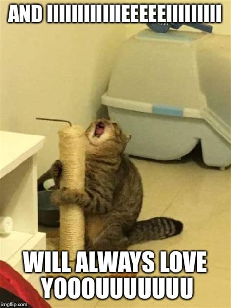 And I Will Always Love You Meme - microphone cat i will always love you imgflip
