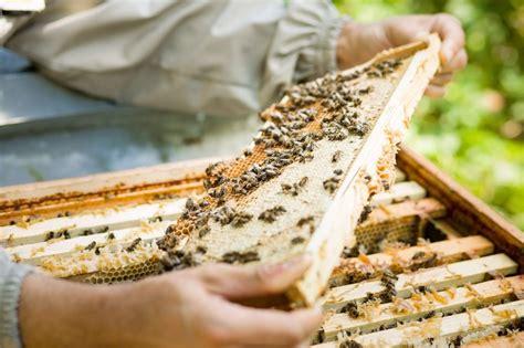 honig englischer garten münchen kleine geile firmen 4 bio honig aus schwabing