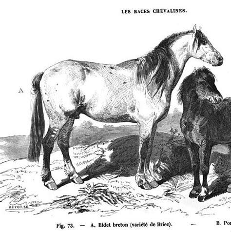 bidet cheval why a bidet is a susanna forrest