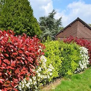 Blühende Pflanzen Winterhart : strauch als sichtschutz immergruner busch als sichtschutz ~ Michelbontemps.com Haus und Dekorationen
