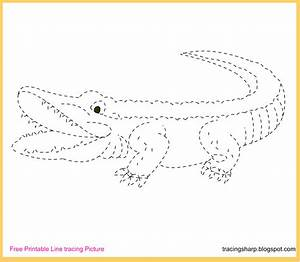 Free Tracing Line Printable: Alligator Tracing Picture  Tracing
