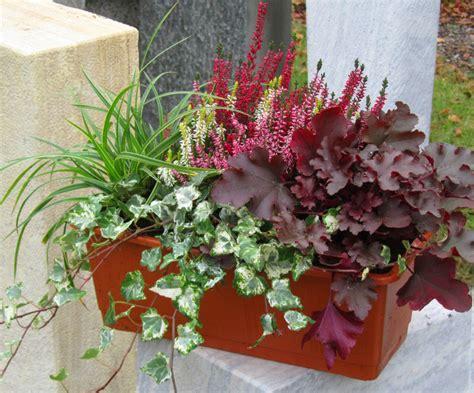 balkonkästen im winter balkonpflanzen set f 252 r balkonkasten 40 60 cm lang pflanzen versand f 252 r die besten winterharten