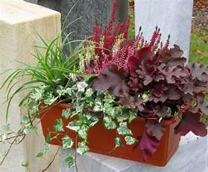 Winterharte Pflanzen Für Balkonkästen : balkonpflanzen set f r balkonkasten 40 60 cm lang pflanzen versand f r die besten winterharten ~ Orissabook.com Haus und Dekorationen