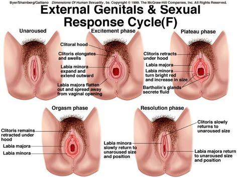 Sexual dysfunction wikipedia jpg 640x480