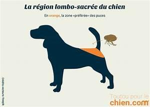 Puce De Chien : comment savoir si un chien a des puces poisson naturel ~ Melissatoandfro.com Idées de Décoration